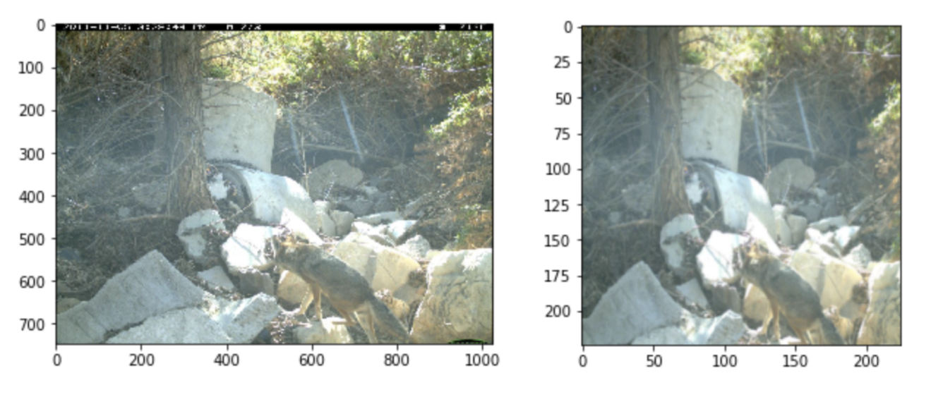 Left: a raw Wildcam image. Right: Having been cropped and scaled to the input dimensions required by ResNet18.
